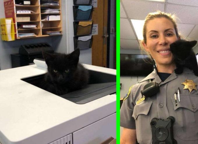 Un piccolo gattino entra in una stazione di polizia e si rifiuta di andarsene