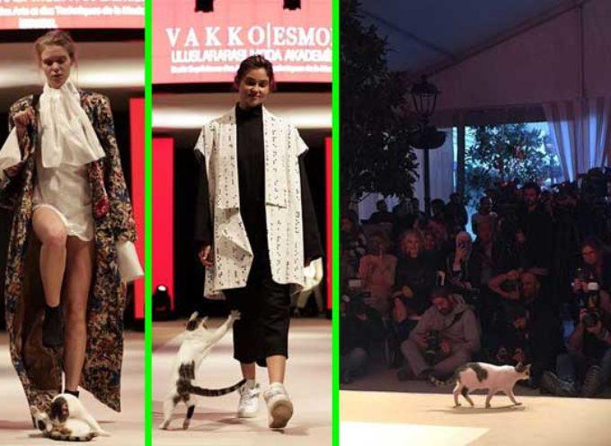 """Gattino sconosciuto invade passerella di moda, è diventa subito la """"top model"""" della serata"""