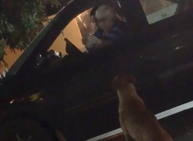 Cane scappa di casa e si finge abbandonato per ricevere gli humburger al Mcdrive