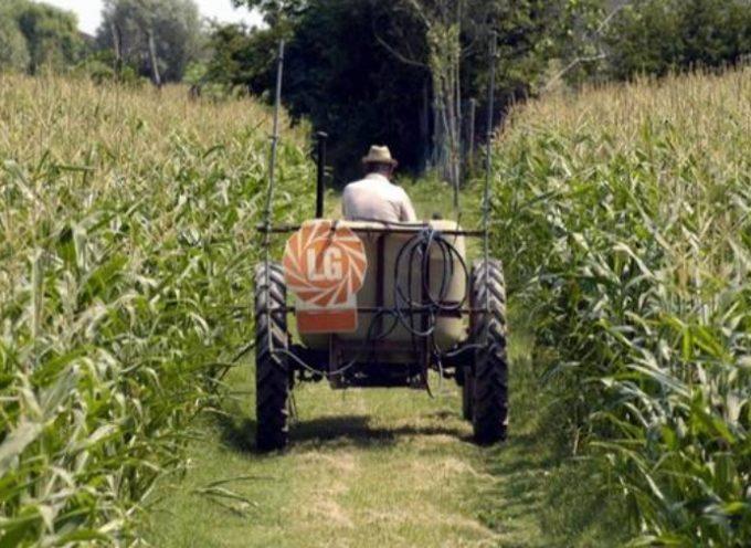 Allarme delle aziende agricole: col reddito di cittadinanza non avremo più lavoratori