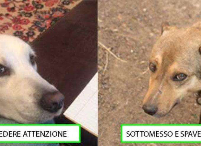 11 segnali del linguaggio del corpo del cane, quando cerca di comunicare