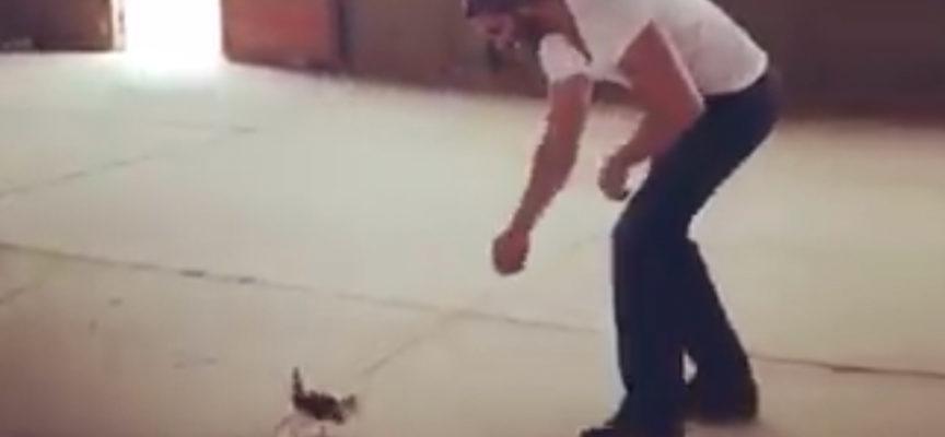 L'uomo trova un minuscolo gattino sul ciglio della strada, e il gattino non lo molla più