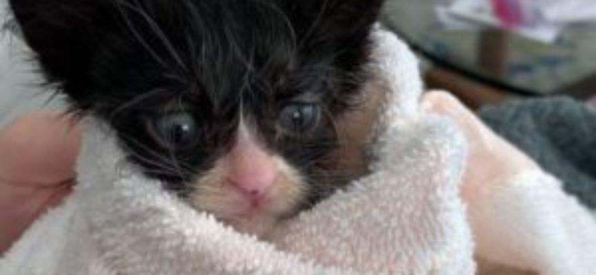 Gattina abbandonata nel parco, tutti i pronostici di sopravvivenza erano negativi, ma lei…