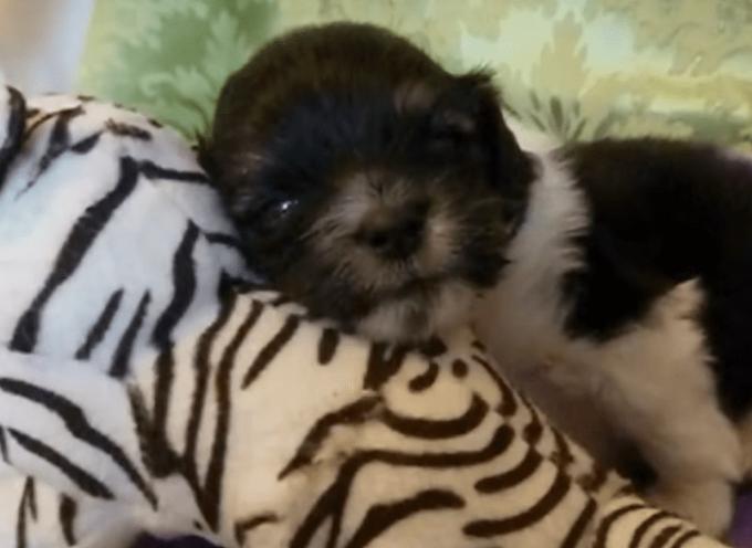 Il cucciolo appena nato è stato abbandonato su un marciapiede – Ma guardalo ora