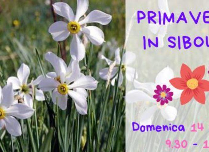 Primavera in Sibolla – Una giornata dedicata al risveglio della natura in uno dei parchi più belli della Toscana