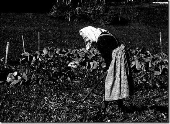 L'orto di primavera vuole gran lavoro: