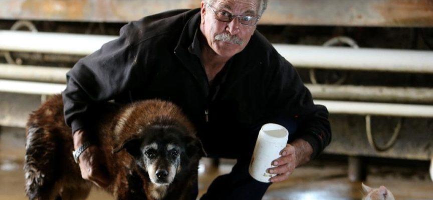 Il più vecchio cane al mondo muore all'età di 30 anni o 112 anni umani