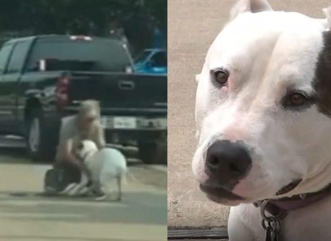 Perde il suo cane da servizio durante l'Uragano Harvey, per riaverlo deve pagare un riscatto