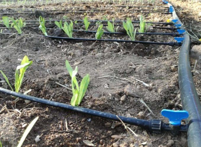 Creare un impianto di irrigazione