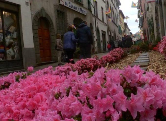 E' stato un week end all'insegna delle manifestazioni dedicate ai fiori