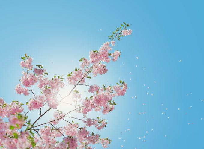 Fornaci di Barga: Relazione qualità dell'aria