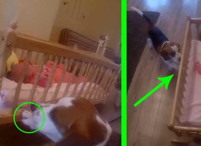 """Cucciolo sà esattamente cosa fare quando piange la sua """"sorellina"""""""