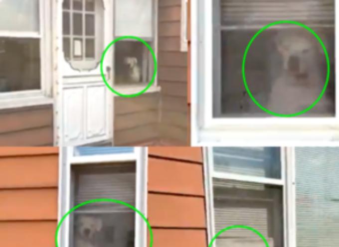 L'adorabile cagnolino che segue l'amico umano dalla finestra di casa