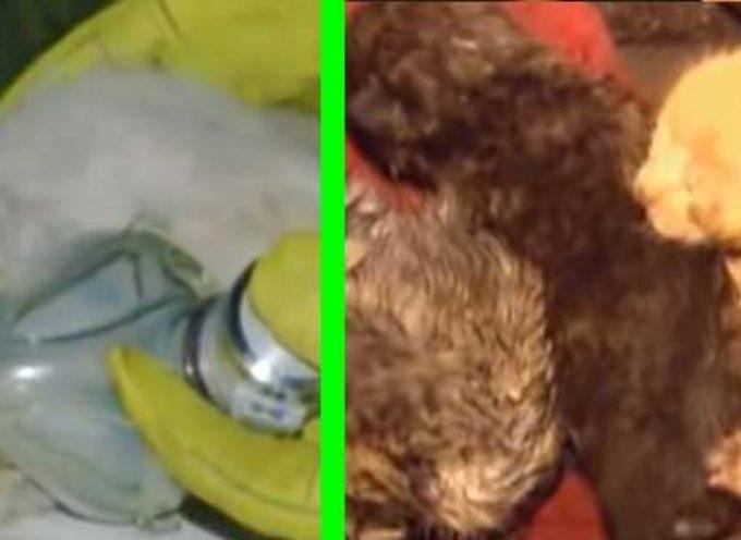 Cane rischia la sua vita in una casa incendiata, perché ha 4 amici da salvare