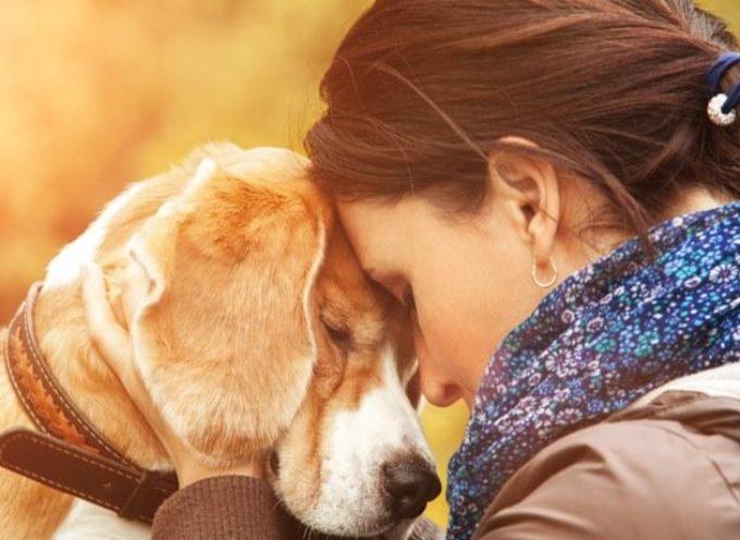 Perdere un cane fa soffrire quanto dire addio un familiare: lo dice la scienza