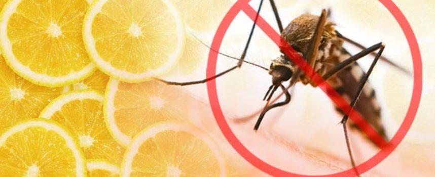 Zanzare: come allontanarle da casa con… un limone arrostito!