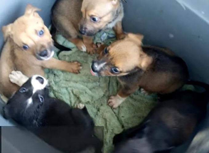 Cuccioli abbandonati in un cassonetto per lasciarli morire