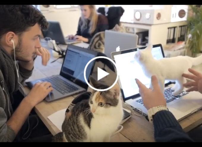 Com'è lavorare con i gatti in ufficio? Basta fare le coccole agli amici pelosi è lo stress sparisce