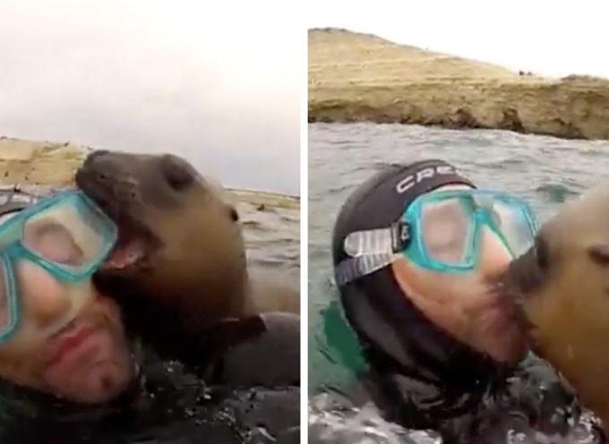 Un cucciolo di foca dà un bel bacio ai suoi nuovi amici subacquei