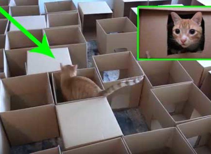 Costruisce un labirinto per i sui gatti con 50 cartoni, il video è visto da 3 milioni di persone