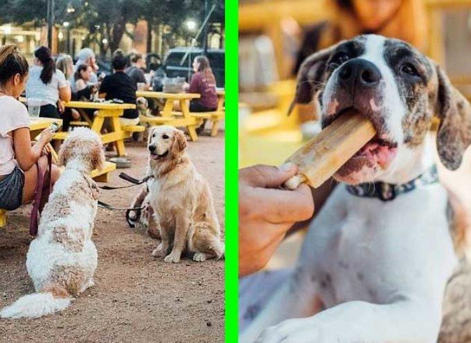 Il lavoro più bello del mondo, cercano un'impiegato che coccola e gioca con decide di cani