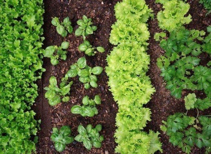 Mese di aprile: semina, raccolto e lavori nell'orto