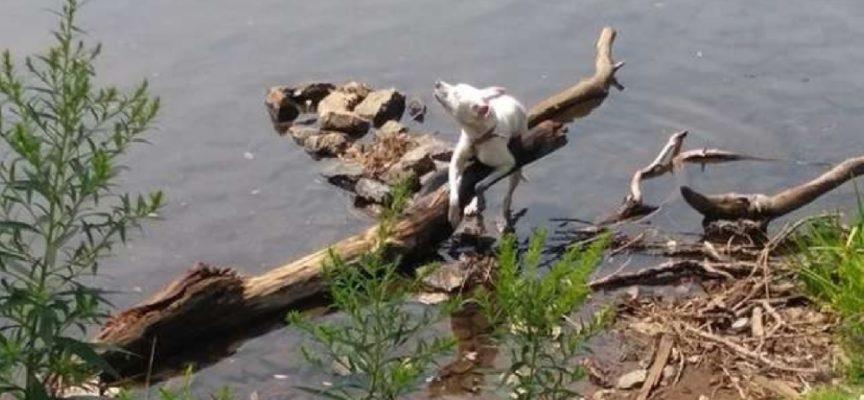 Lasciano un cane legato in un canale pericoloso. Ma lui non smette di lottare e la vita trionfa!