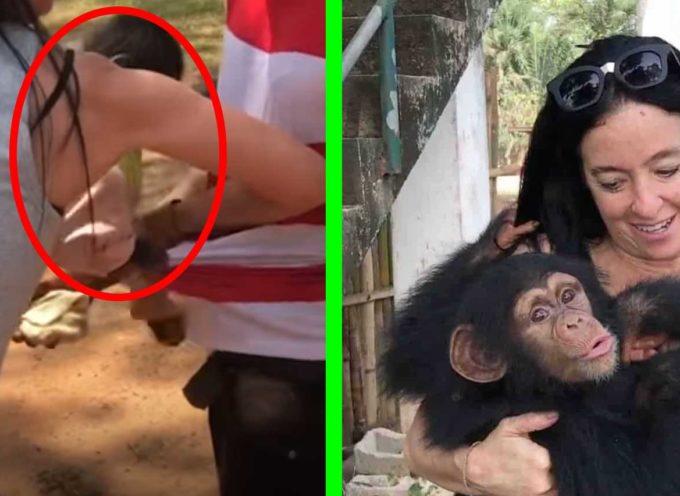 Donna si finge acquirente per salvare uno scimpanzé dal suo trafficante