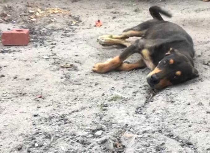 Il video del miracolo del cane che non poteva camminare