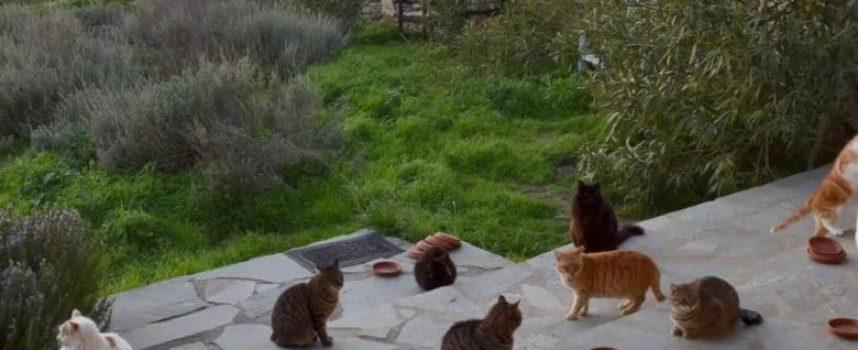 Un lavoro perfetto in un'isola greca per gli amanti dei gatti