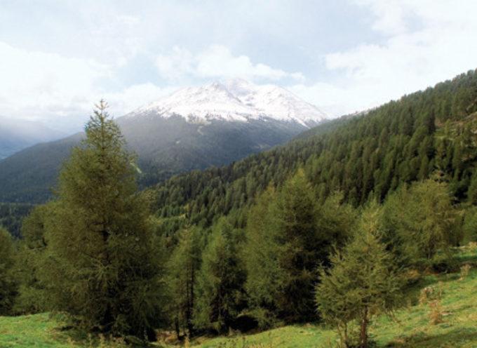 In Toscana, buono lo stato delle aree boschive
