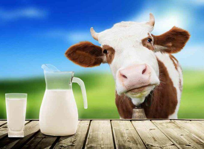 Latte vaccino? Piu' ne bevi, piu' perdi CALCIO dalle ossa
