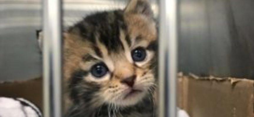 Donna salva gattino trovato a vagare da solo per le strade, cambierà la sua vita per sempre
