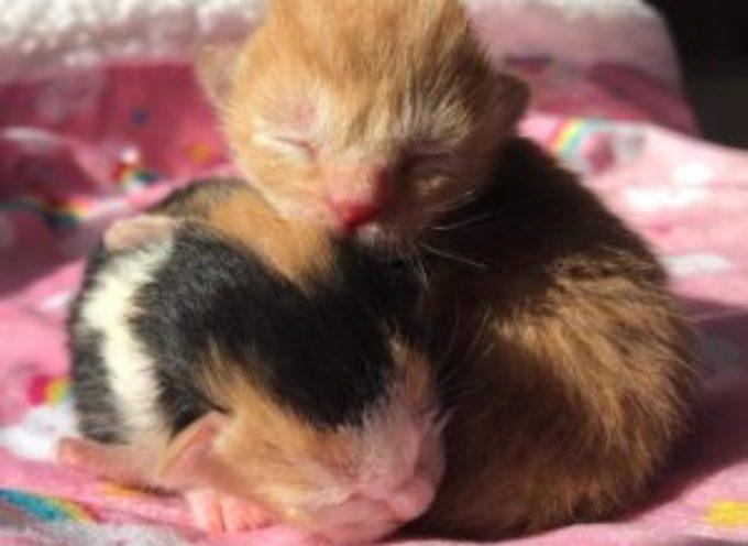 Gattini respinti dalla loro cucciolata, si confortano a vicenda fino a quando non vengono salvati