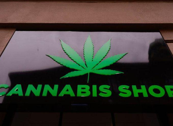 Cassazione penale Sezioni Unite: vietata la vendita dei prodotti derivati dalla Cannabis.