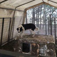 Segue alcune mucche dopo essere fuggito da una fattoria e per poi salvare altri 16 cani