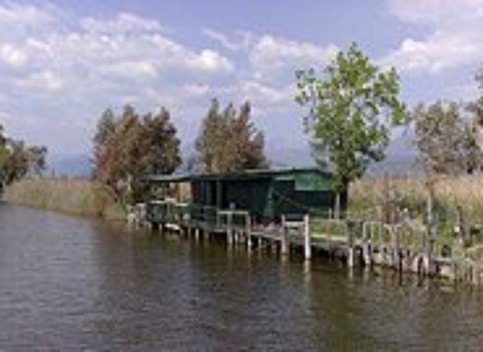 Il Parco di San Rossore-Migliarino-Massaciuccoli ha aderito al Santuario dei cetacei