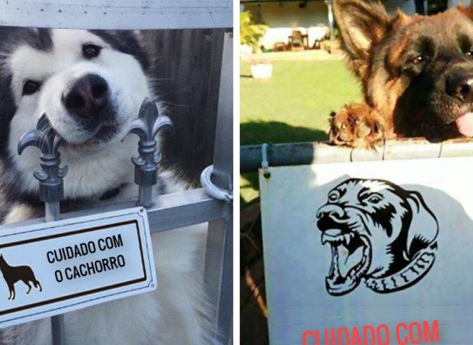 """47 cani super pericolosi dietro il cartello """"Attenti al cane"""", saranno davvero pericolosi?"""