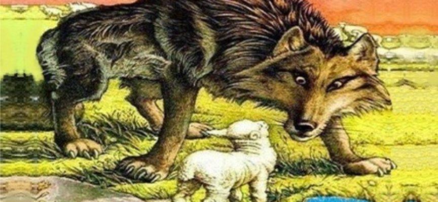 IL SENATORE – ANDREA MARCUCCI – Vi avverto non è una favola, qui Esopo o Fedro non c'entrano nulla, però i protagonisti sono un lupo ed un agnello,