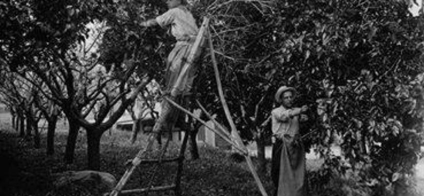 In maggio iniziava l'allevamento dei bachi da seta