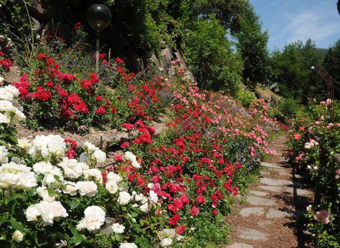 """"""" Per Santa Rita, ogni rosa è fiorita"""", recita il proverbio."""