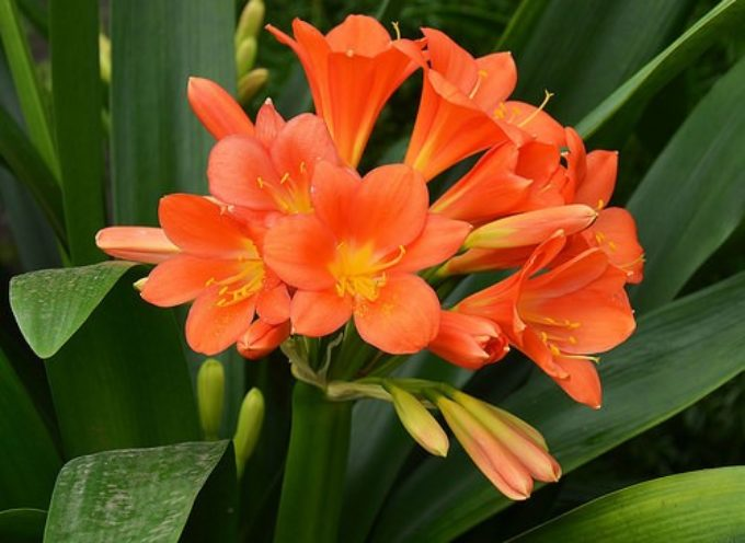 I fiori arancioni.