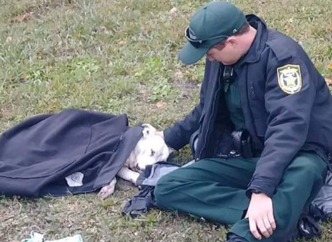 L'ufficiale si rifiuta di lasciare il cane colpito da un'auto