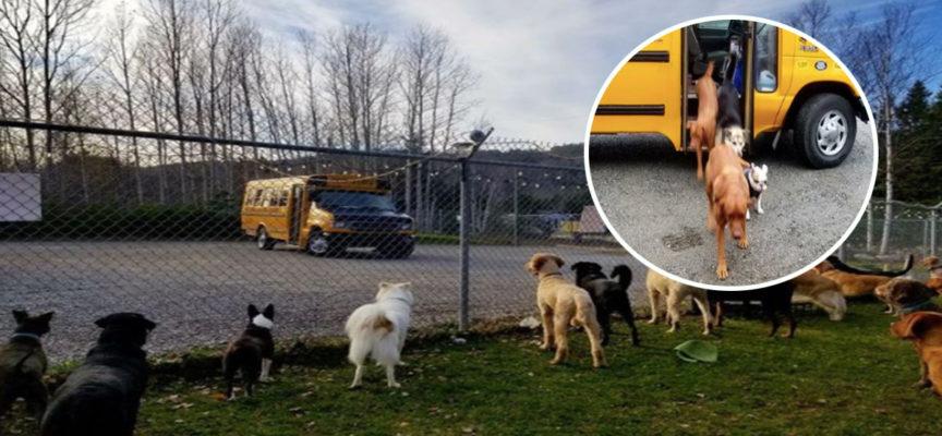 Il Canada crea l'asilo nido per cuccioli con il diritto a prendere degli autobus