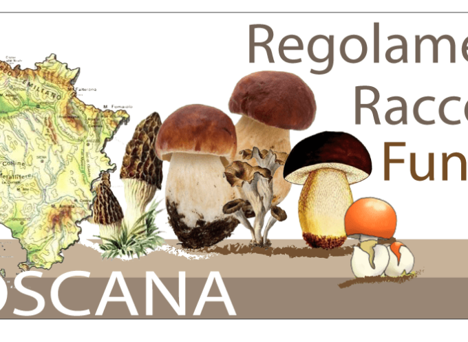 Raccolta funghi in  Toscana 2019