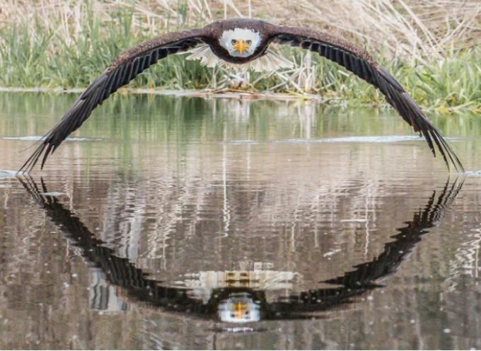 Lo scatto magnifico di un fotografo amatoriale