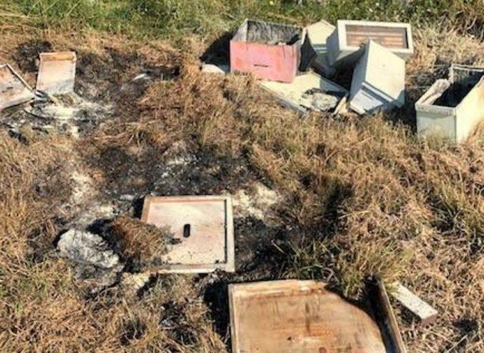 Alveari distrutti dai vandali: oltre mezzo milione di api bruciate vive