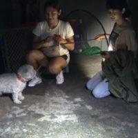 Salva un cane randagio e scoprire che ha condiviso il nascondiglio con un senzatetto