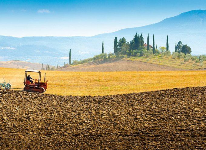 Agricoltura, Istat: «Vale 59,3 miliardi. +0,6% produzione e +0,9% valore aggiunto nel 2018»