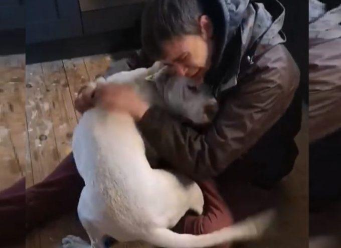 Lecca le lacrime felici del tuo proprietario senzatetto che pensava che non l'avrebbe mai trovata
